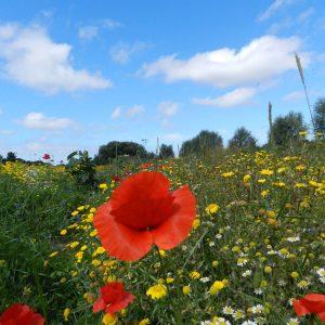 Wildflowers at apex park