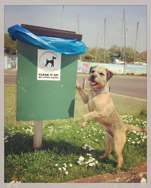 Little dog posing by dog bin