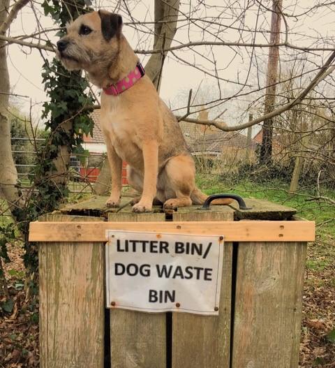 Little dog sat on top of a litter/dog waste bin