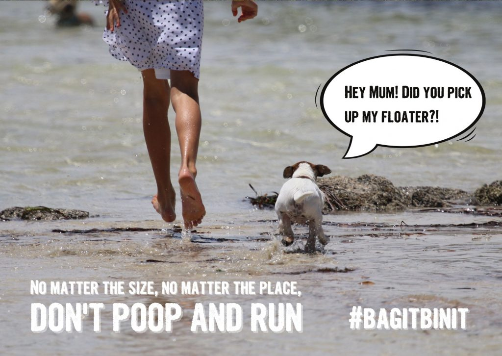 Dog and owner paddling in the sea, Don't poop and run