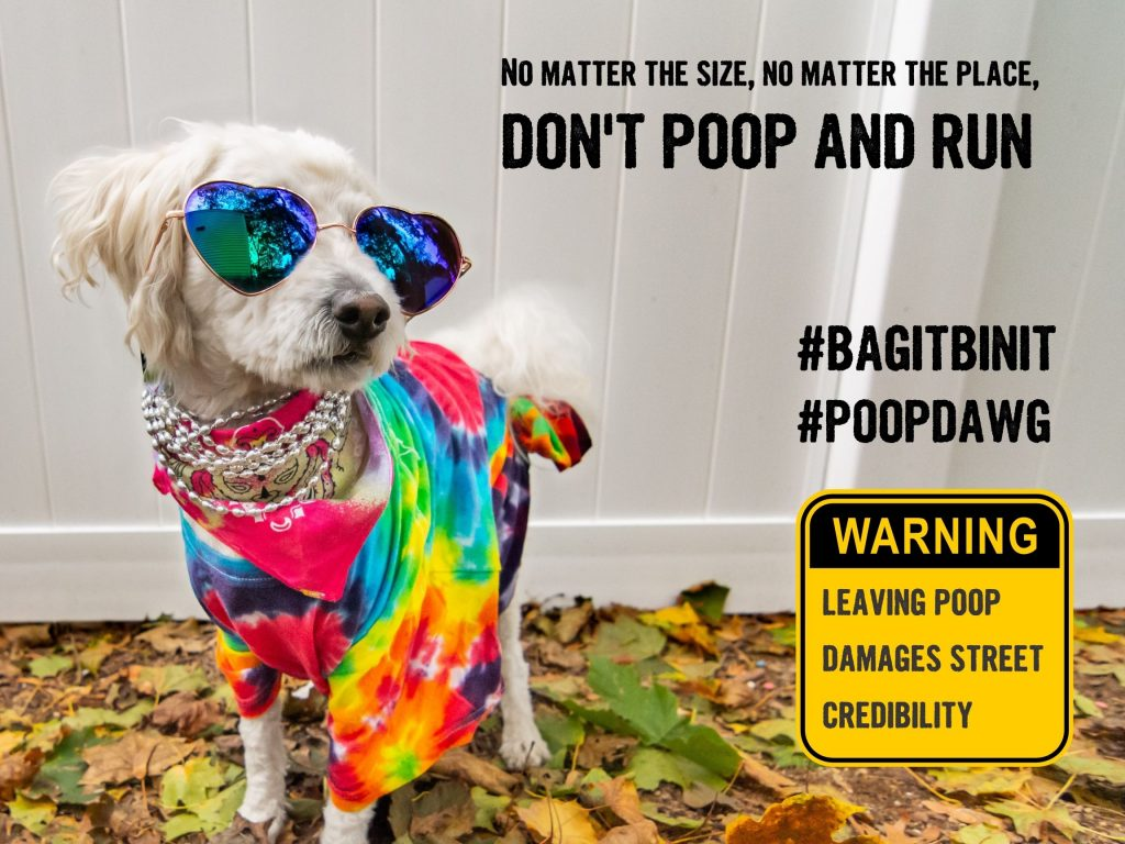 Small white dog dressed in colourful scarf and sunglasses, Don't poop and run
