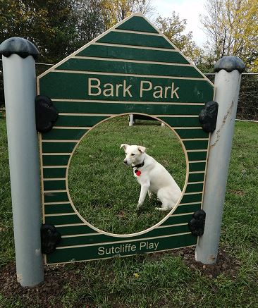 Image of white dog in dog park