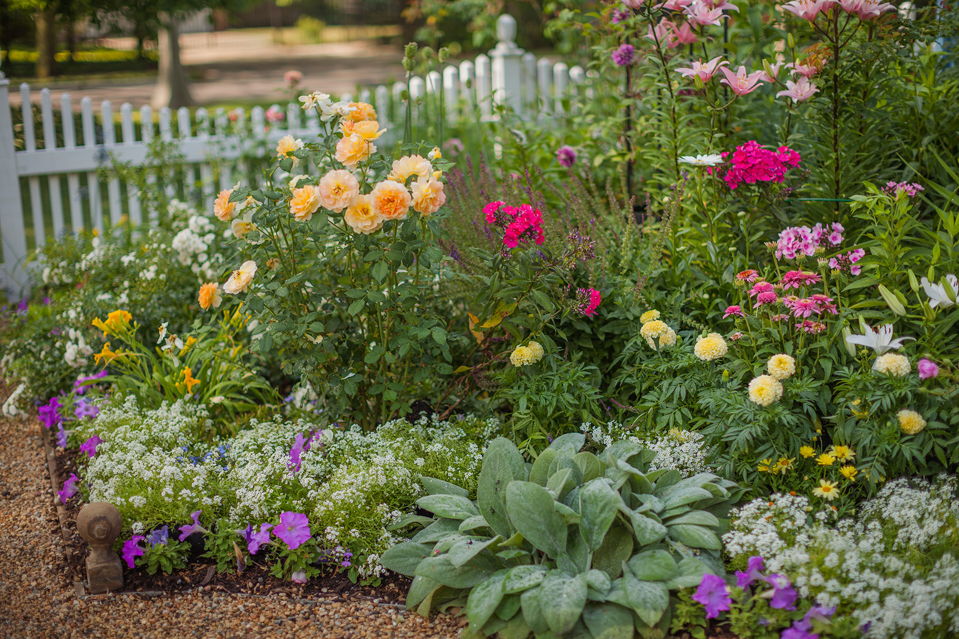 image of flowers in a garden